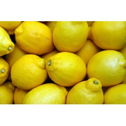 CITRONS - BIO - LOT DE 3